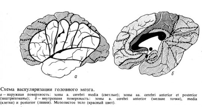Схема васкуляризации головного мозга